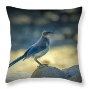 Western Scrub Jay Thief Throw Pillow
