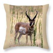 Where The Antelope Play Throw Pillow