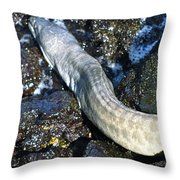 White Moray Eel Throw Pillow