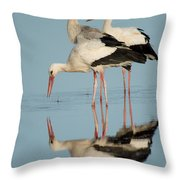 White Storks Ciconia Ciconia In A Lake Throw Pillow