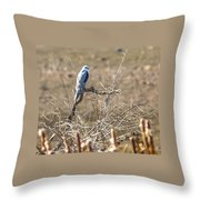 White Tailed Kite Throw Pillow