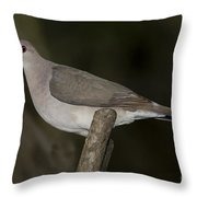White-tipped Dove Throw Pillow