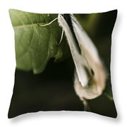 White Winged Moth Insect On A Green Tree Leaf Throw Pillow