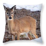 Whitetail Throw Pillow