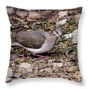 Whitetipped Dove Throw Pillow