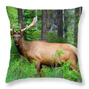 Wild Bull Elk Throw Pillow
