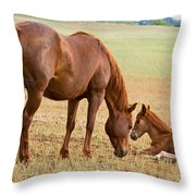 Wild Horse Mother And Foal Throw Pillow