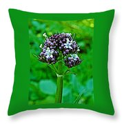 Wild Mint On Great Glacier Trail In Glacier National Park-british Columbia Throw Pillow