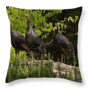 Wild Turkey Meleagris Gallopavo Throw Pillow