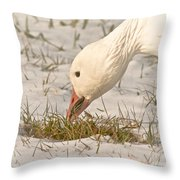 Wintering Snow Goose Throw Pillow