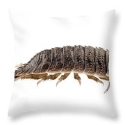 Woodlouse Species Porcellio Wagnerii Throw Pillow