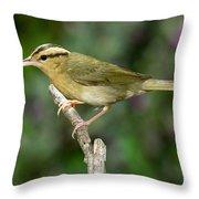 Worm-eating Warbler Throw Pillow