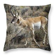 Wyoming Pronghorn Throw Pillow
