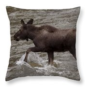 Yearling Moose In The Shoshone River   #1289 Throw Pillow
