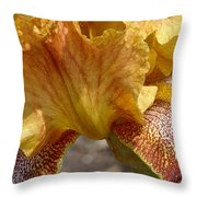Yellow And Maroon Iris Throw Pillow