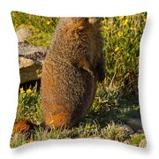 Yellow Bellied Marmot On Alert In  Rocky Mountain National Park Throw Pillow