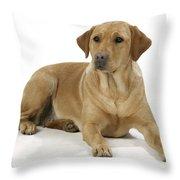 Yellow Labrador Retriever Throw Pillow