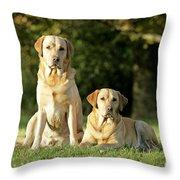 Yellow Labrador Retrievers Throw Pillow