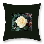 Yellow Rose At Dawn Throw Pillow