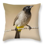 Yellow-vented Bulbul Pycnonotus Xanthopygos Throw Pillow