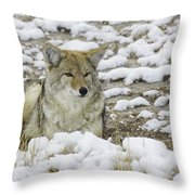 Yellowstone Coyote Throw Pillow