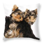 Yorkie Puppies Throw Pillow