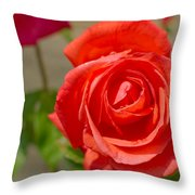 Young Red Rose After Rain Throw Pillow