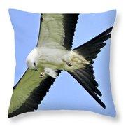 Young Swallow-tailed Kite Throw Pillow