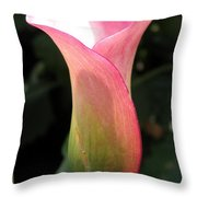 Zantedeschia Named Mozart Throw Pillow