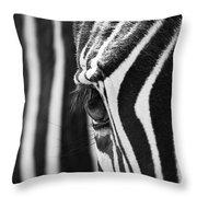 Zebra Eye Throw Pillow
