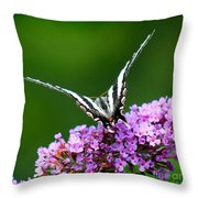 Zebra Swallowtail Butterfly Square Throw Pillow