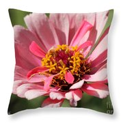 Zinnia From The Whirlygig Mix Throw Pillow