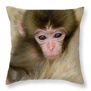 Baby Snow Monkey, Japan Throw Pillow