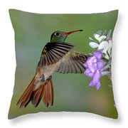 Buff-bellied Hummingbird Throw Pillow