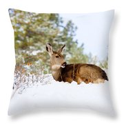 Mule Deer In Snow Throw Pillow