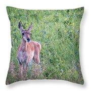 Pronghorn Antelope Portrait Throw Pillow