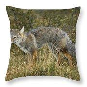 Patagonia Grey Fox Throw Pillow