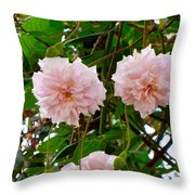 Renewal Series Throw Pillow