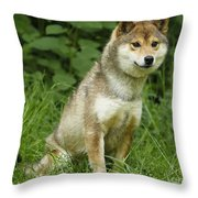 Shiba Inu Dog Throw Pillow