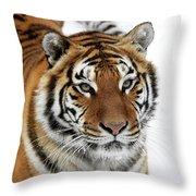 Tigre De Siberie Panthera Tigris Altaica Throw Pillow
