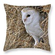 100205p201 Throw Pillow