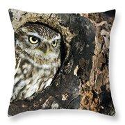 100205p258 Throw Pillow