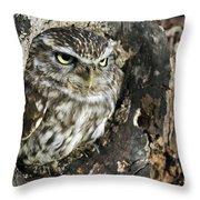 100205p259 Throw Pillow