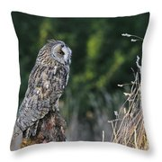 100205p264 Throw Pillow