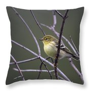 Blackpoll Warbler Throw Pillow