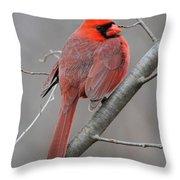 Male Northern Cardinal Throw Pillow