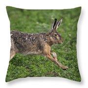 110202p213 Throw Pillow