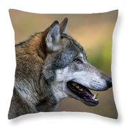 110221p045 Throw Pillow