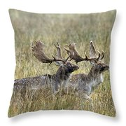 110221p118 Throw Pillow
