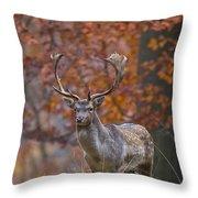 110221p135 Throw Pillow